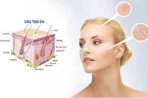 Hình ảnh cấu tạo da ảnh hưởng đến độ dày - mỏng của làn da