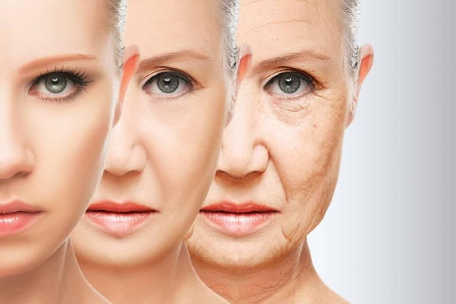 Lão hóa làm giảm collagen và elastin khiến da đỏ và mỏng dần